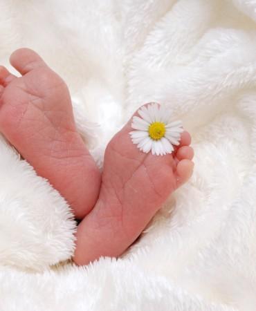 bebek (1)